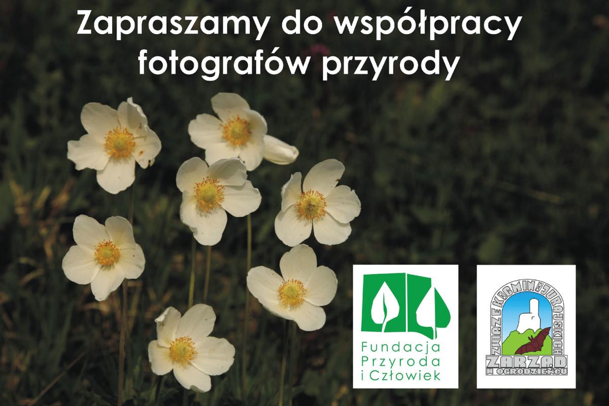 zaproszenie do współpracy fotografów
